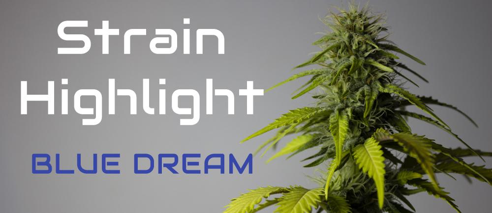 Greener Pastures Medical Marijuana Strain Highlight