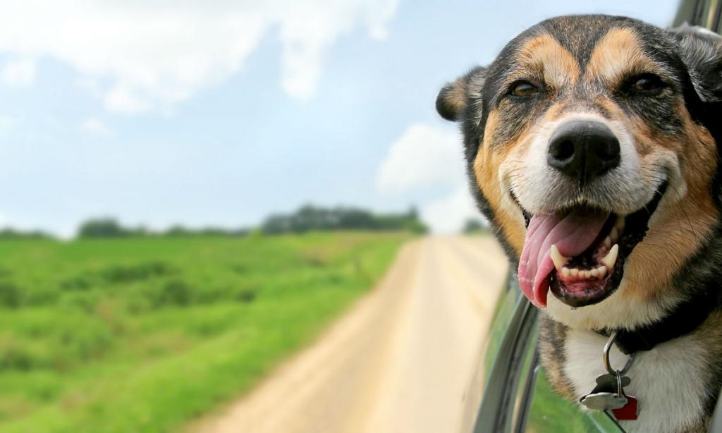 Medicinal Marijuana for Montana Dogs, Cats, and Other Pets