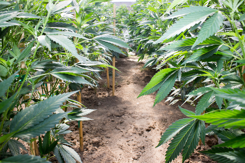 What Does SB333 Mean for Medical Marijuana Dispensaries in Montana?